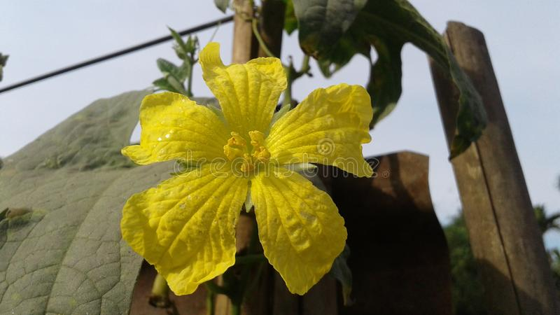 Flor da cabaça de Ridge imagens de stock royalty free