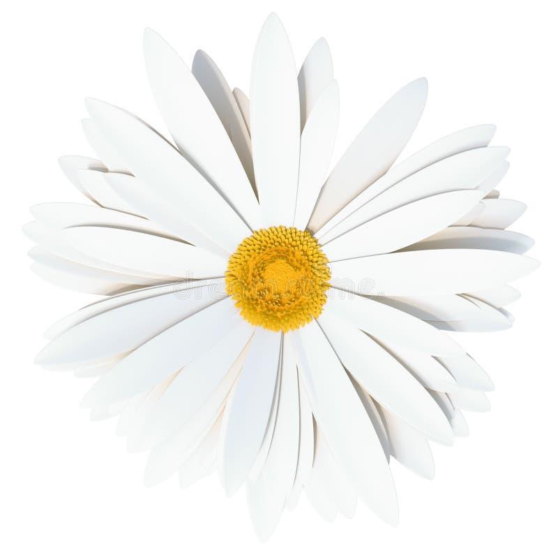 Flor da camomila Símbolo do verão para seu projeto ilustração do vetor