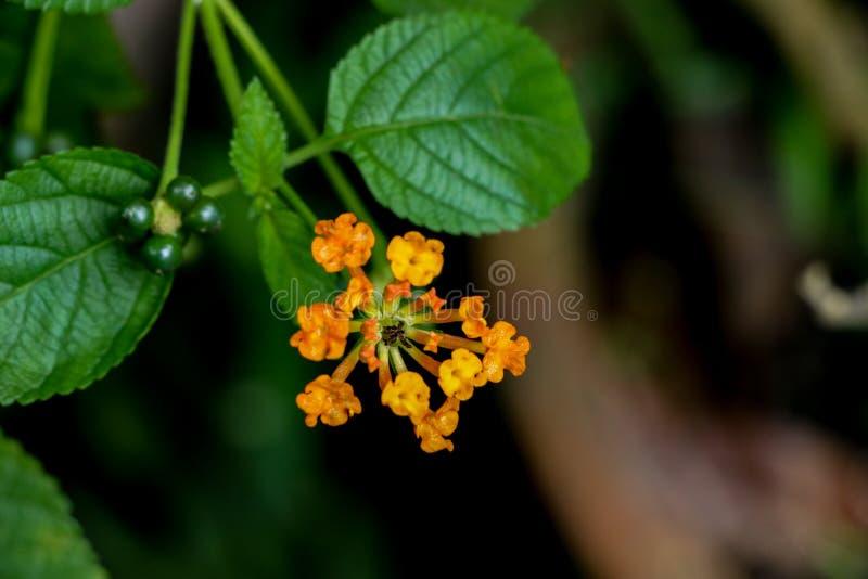 Flor da conversão no jardim fotografia de stock royalty free