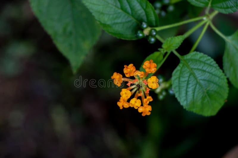 Flor da conversão no jardim fotos de stock royalty free