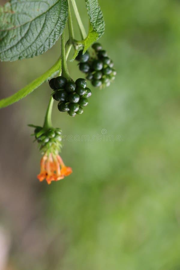 Flor da conversão no jardim foto de stock