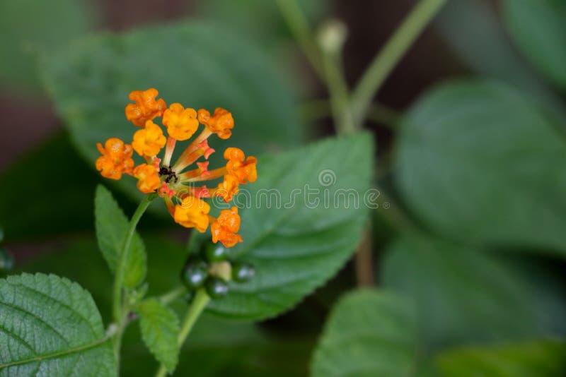 Flor da conversão no jardim fotografia de stock
