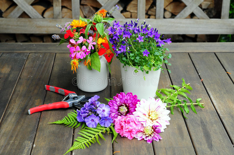 Flor da dália do jardim foto de stock royalty free