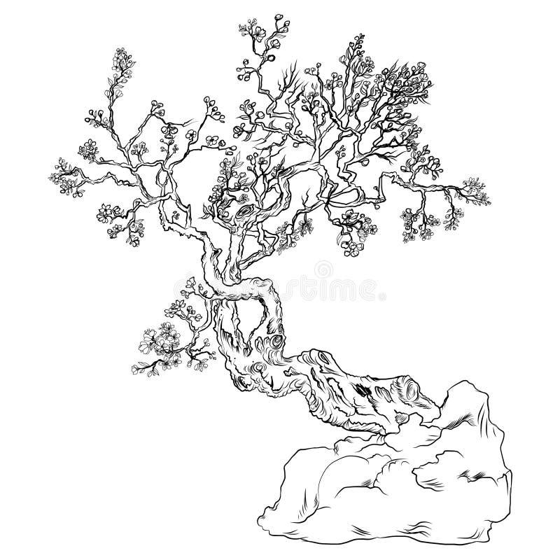 Flor da flor de cerejeira de Japão Flor do pêssego do esboço e da silhueta ilustração do vetor