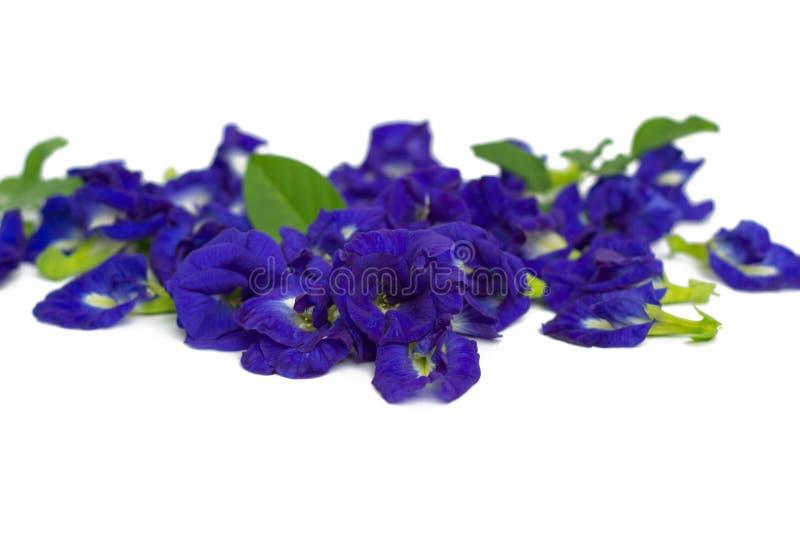 Download Ervilha de borboleta foto de stock. Imagem de pigment - 29840804
