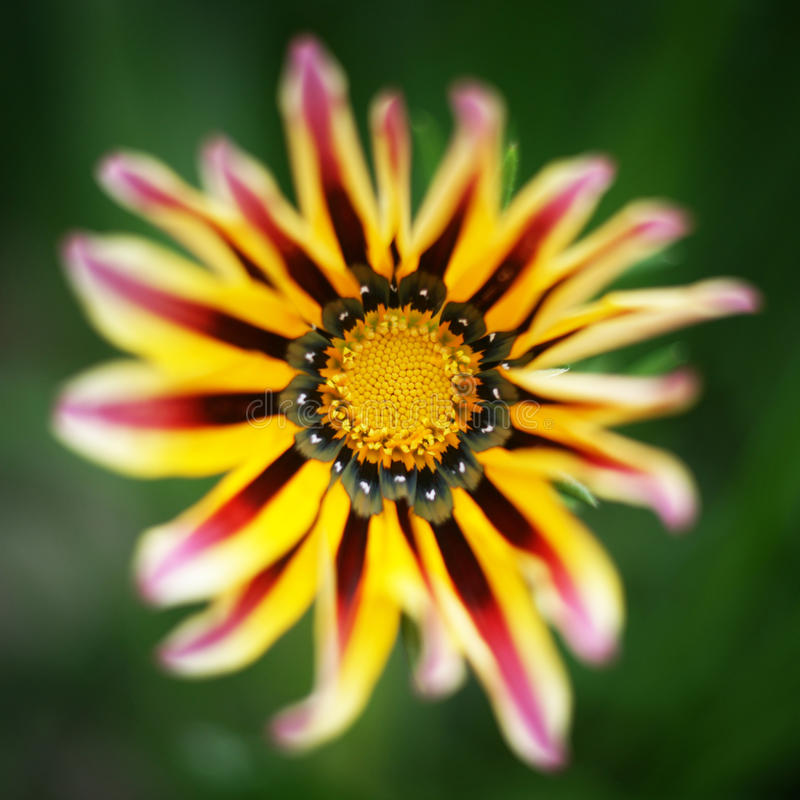 Download Flor da flor imagem de stock. Imagem de macro, puro, floral - 26503263