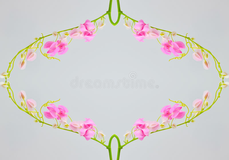 Flor da flor imagem de stock royalty free