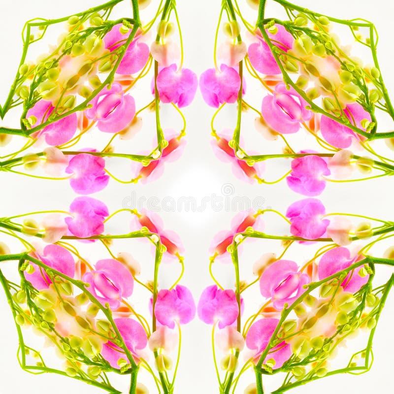 Flor da flor fotos de stock royalty free