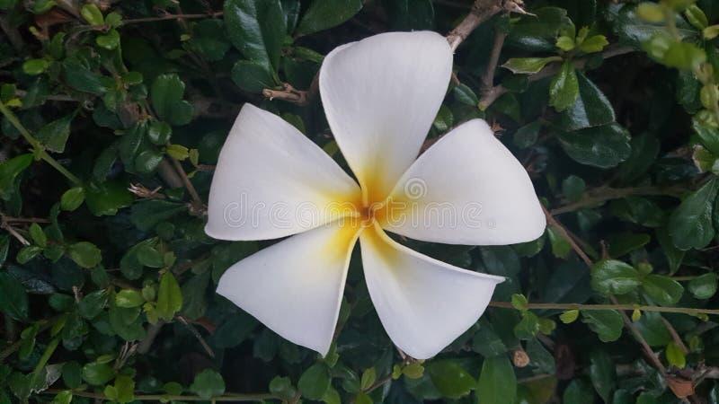 Flor da flor fotografia de stock royalty free