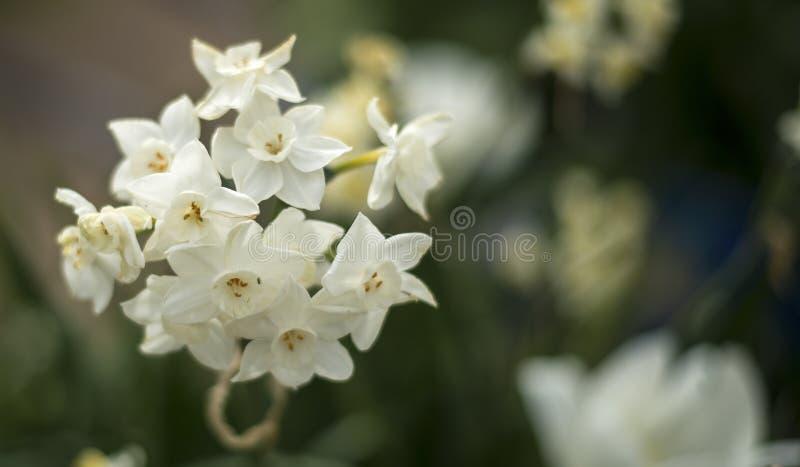 Flor da flor branca foto de stock