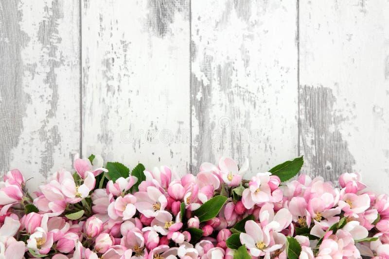 Flor da flor da mola fotos de stock
