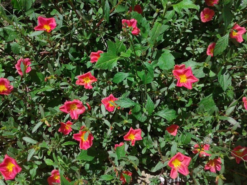 Flor da flor no jardim foto de stock