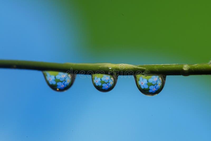 Flor da gota da água imagens de stock royalty free