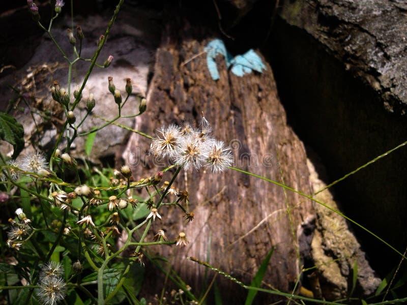 a flor da grama está seca fotografia de stock