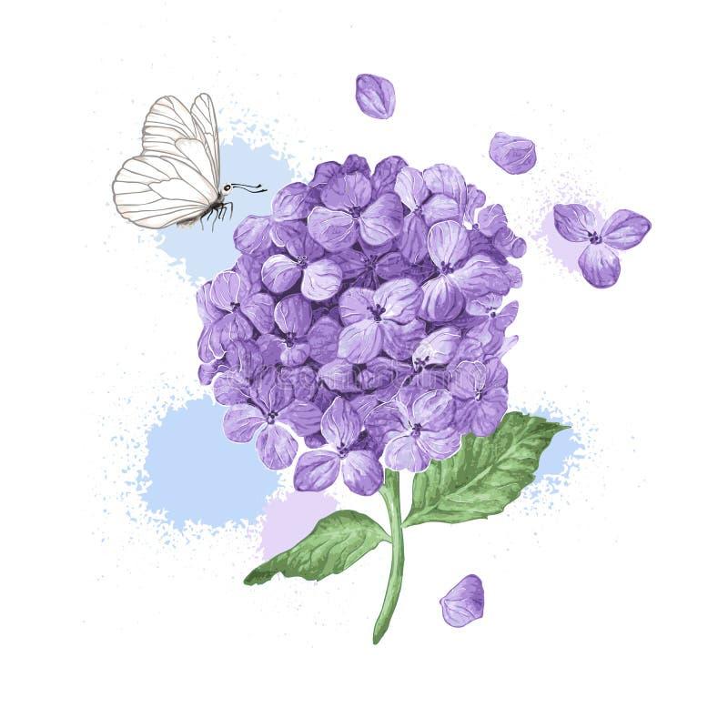 A flor da hortênsia, borboleta e espirra no estilo da aquarela isolada no fundo branco Para cartões, cópias ilustração stock