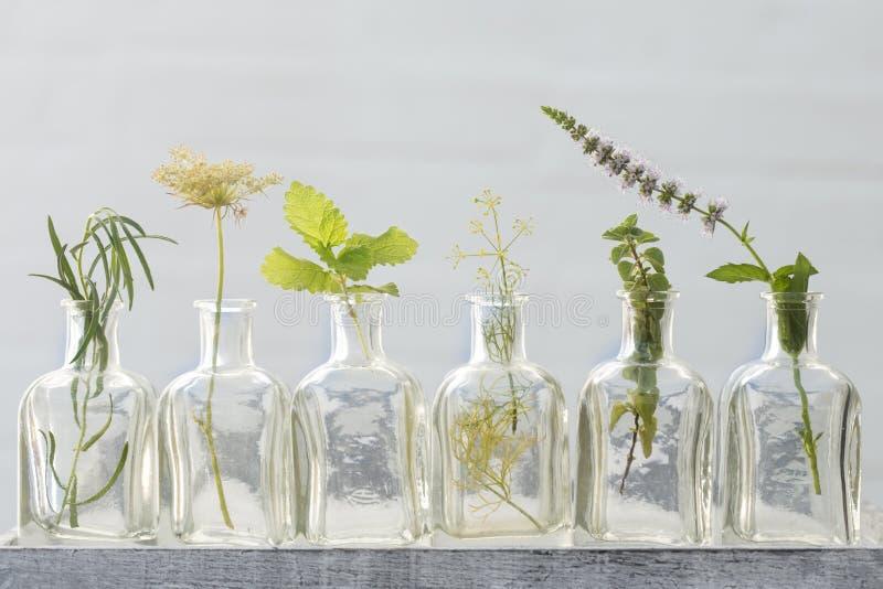 Flor da hortelã, estragão, oréganos, flor da salsa e erva-cidreira dentro imagem de stock