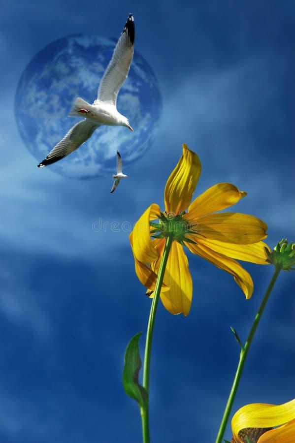 Flor da lua fotos de stock royalty free