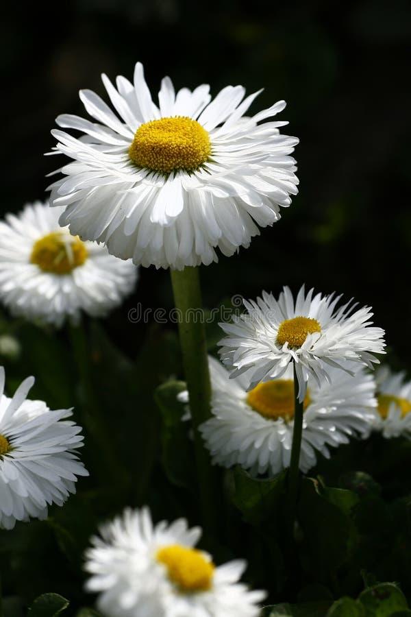 Flor da lua fotos de stock