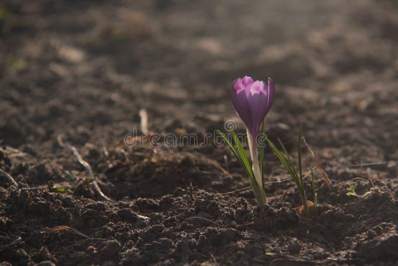 Flor da luz do sol foto de stock