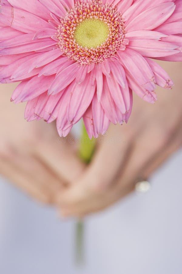 Flor da máscara da cor-de-rosa fotografia de stock royalty free