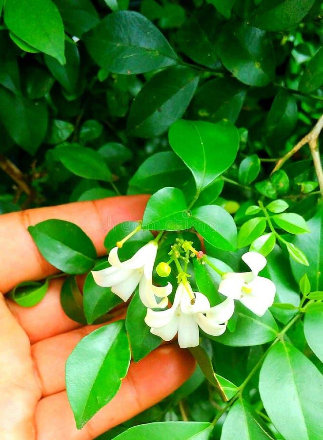 Flor da mão fotografia de stock