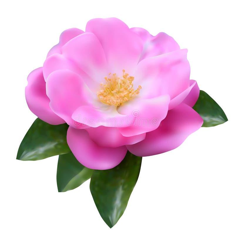 Flor da malha de Rosa ilustração stock