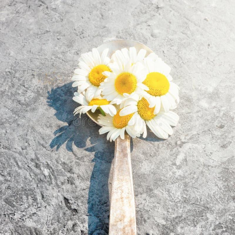 A flor da margarida da camomila floresce ervas na colher retro velha imagem de stock