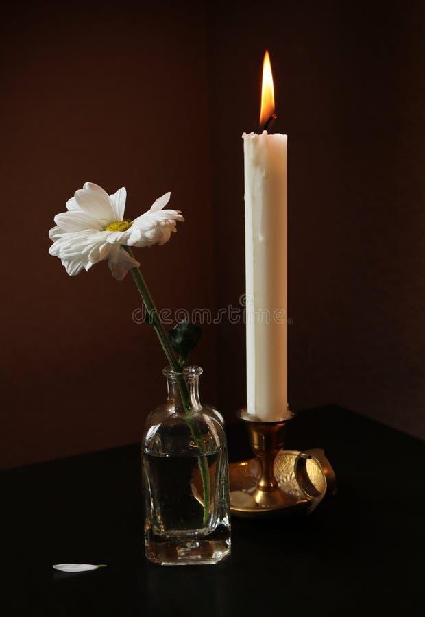 Flor da margarida e vela de queimadura imagens de stock royalty free