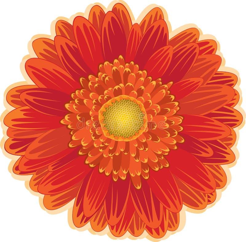 Flor da margarida vermelha e alaranjada ilustração do vetor