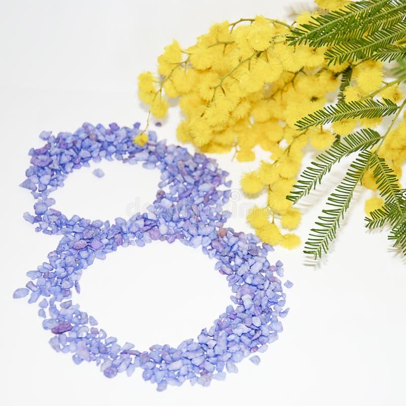 Flor da mimosa do dia das mulheres internacionais imagens de stock