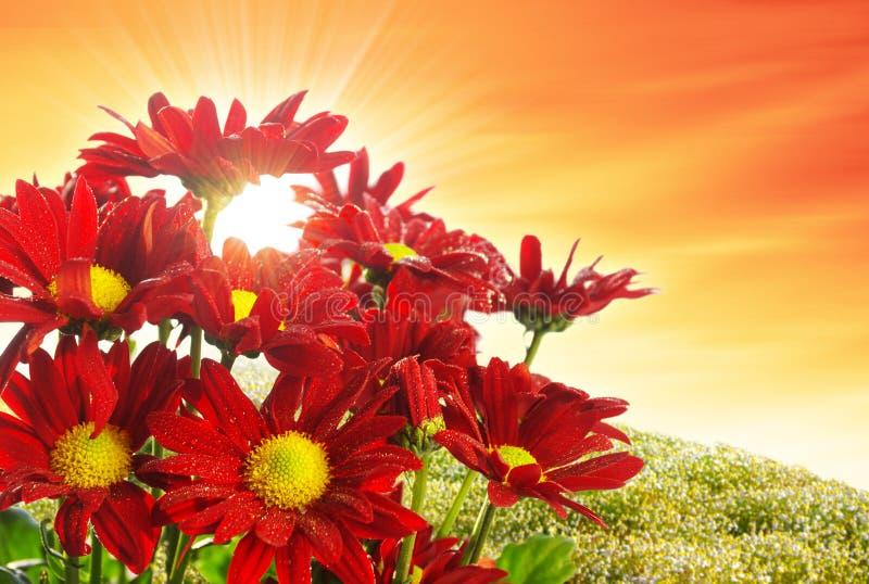 Flor da mola foto de stock royalty free