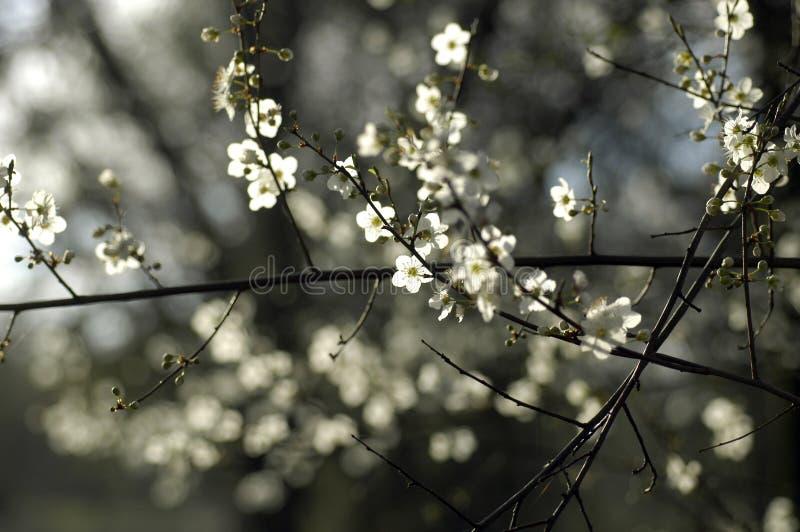 Download Flor da mola imagem de stock. Imagem de vinda, flor, adiante - 540831