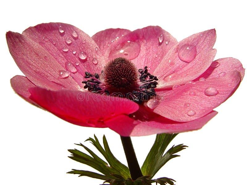 Flor da mola fotos de stock royalty free