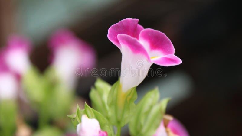 Flor da natureza nunca para dar acima fotografia de stock