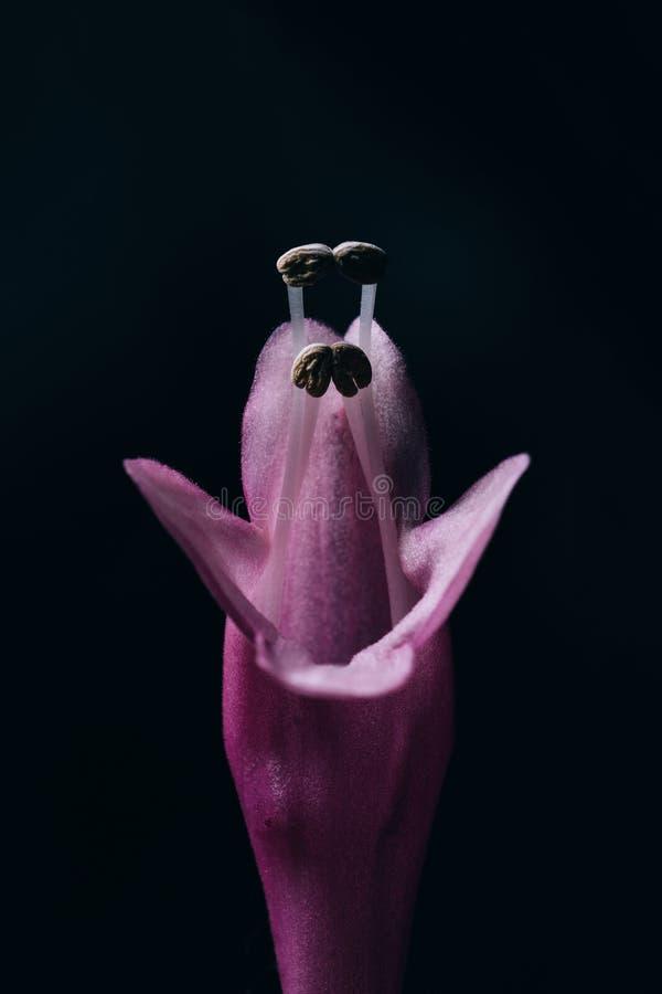 Flor da obscuridade e do mistério no fundo preto fotos de stock