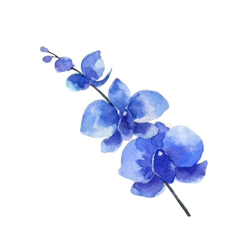 Flor da orquídea azul do vetor da aquarela isolada no fundo branco ilustração stock