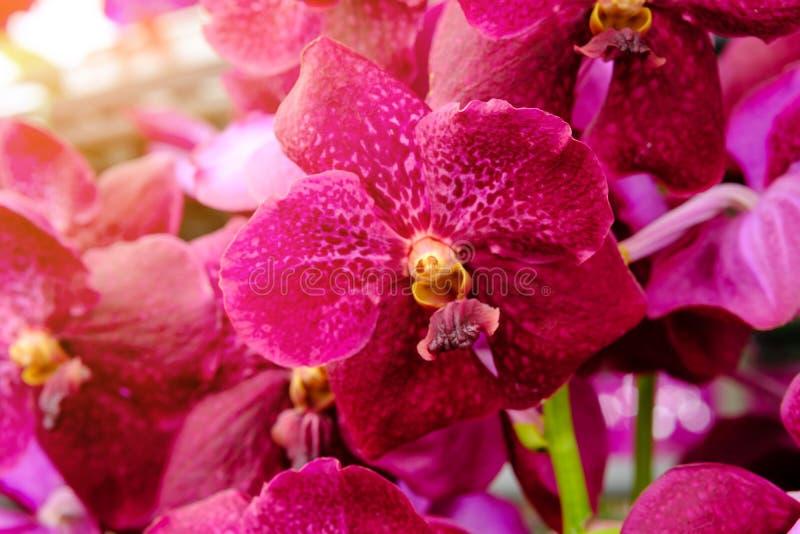 Flor da orquídea e fundo bonitos das folhas do verde no garde fotografia de stock