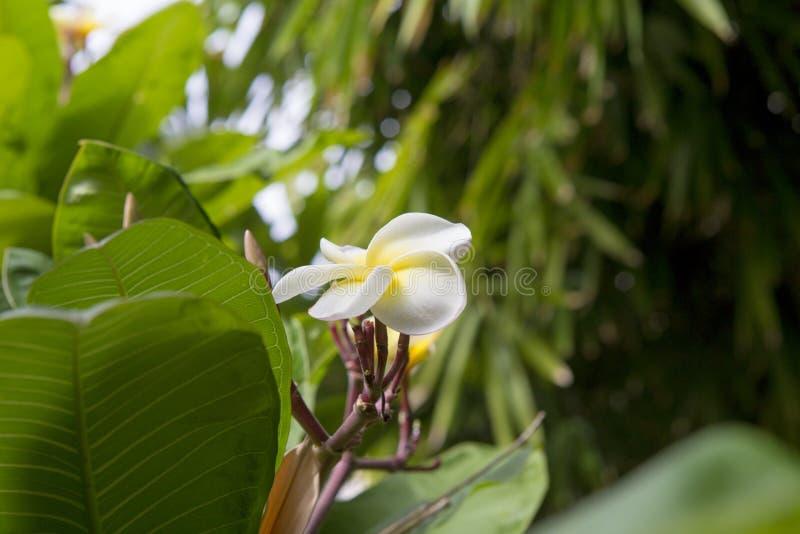 Flor da orquídea em uma planta madura fotografia de stock