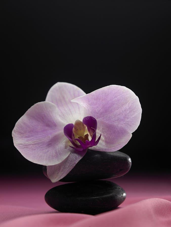 Flor da orquídea na pedra imagens de stock