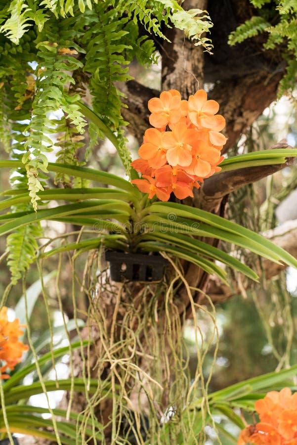 Flor da orquídea no jardim imagem de stock