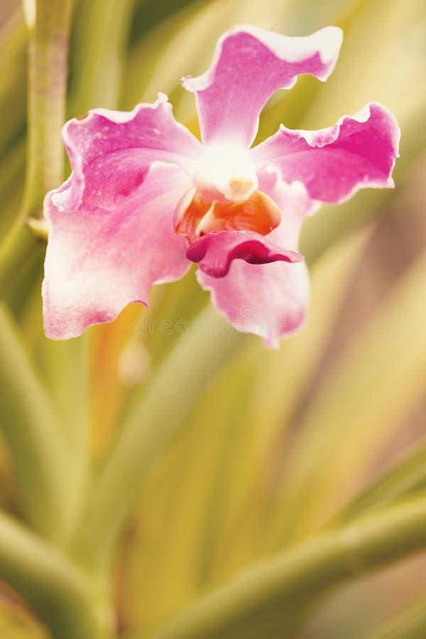 Flor da orqu?dea no jardim imagens de stock