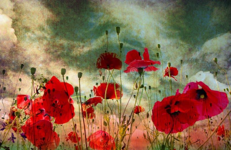 Flor da papoila ilustração stock