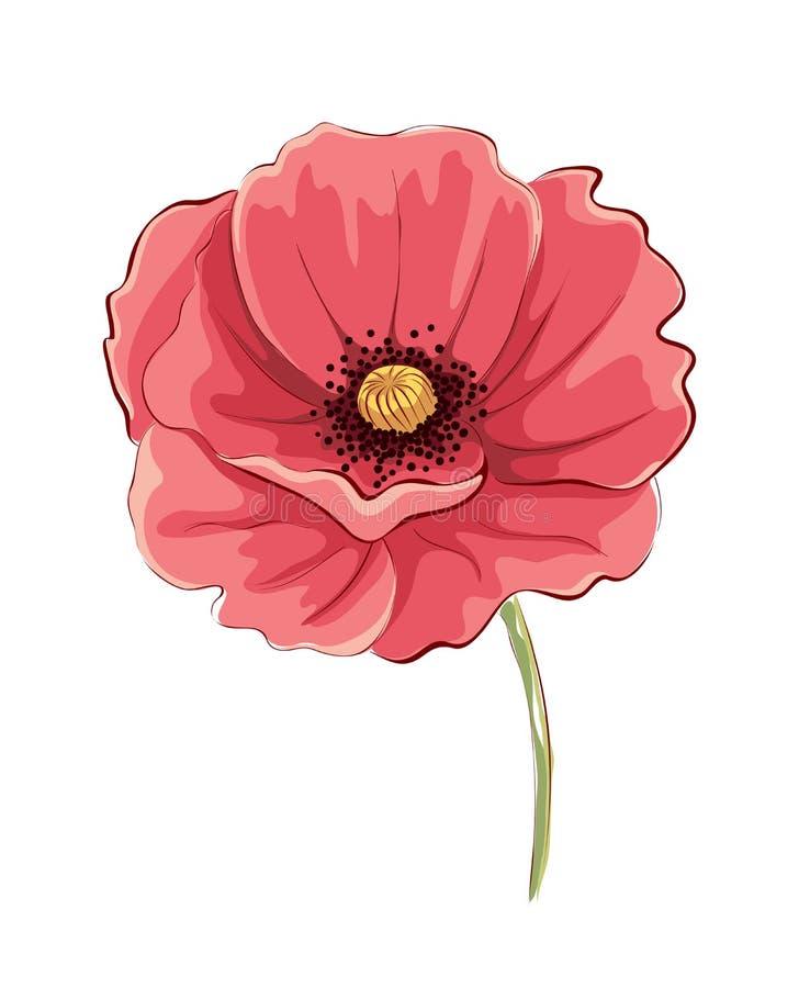 Flor da papoila ilustração royalty free