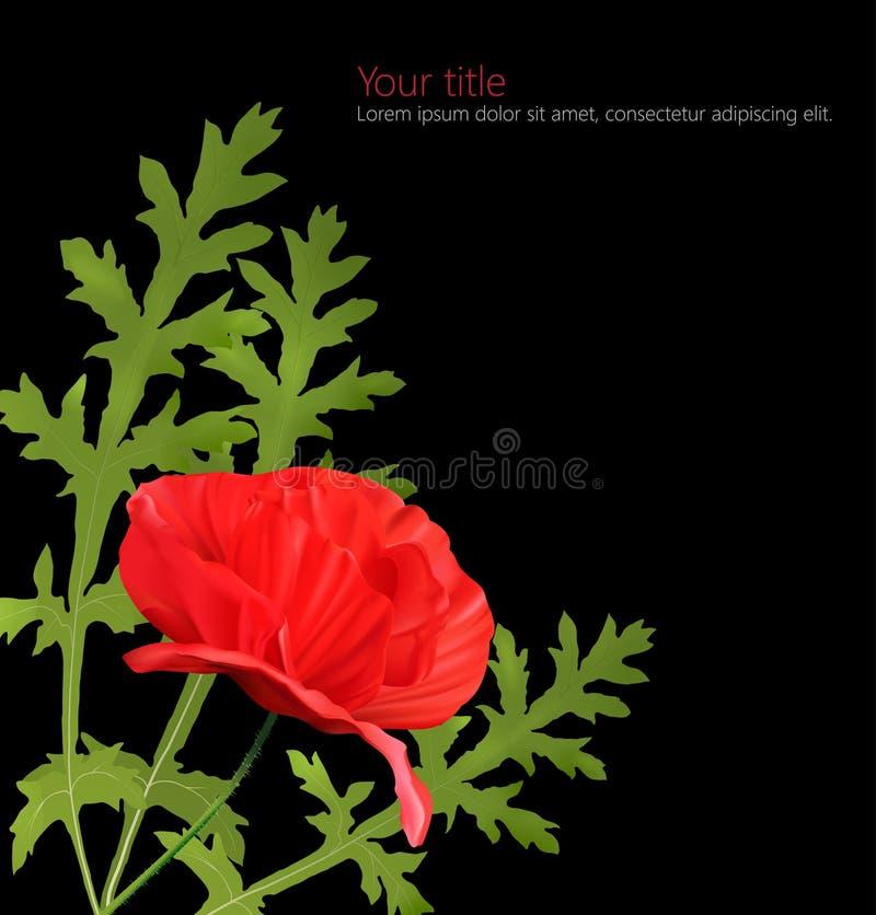 Flor da papoila isolada no fundo preto ilustração do vetor