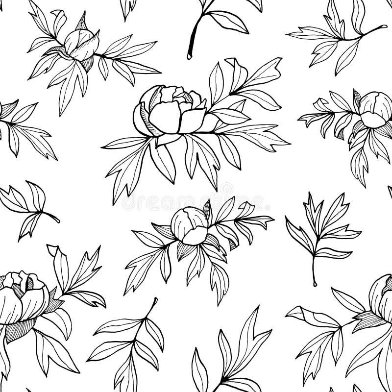 Flor da peônia, botões, teste padrão sem emenda monocromático das folhas Ilustração floral tirada mão do esboço Rebecca 36 ilustração royalty free