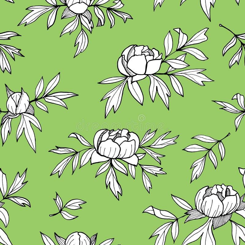 Flor da peônia, botões, teste padrão sem emenda monocromático das folhas Ilustração floral tirada mão do esboço Rebecca 36 ilustração stock