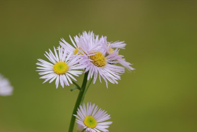 Flor da primavera em Massachusetts foto de stock