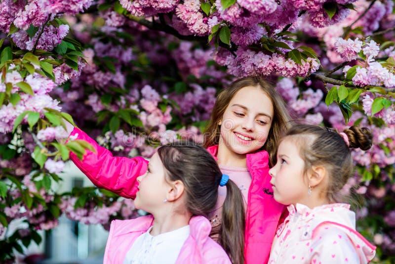 Flor da proposta das flores As crian?as apreciam a flor de cerejeira Amizade verdadeira Pique nosso favorito As crian?as saltam j fotos de stock royalty free