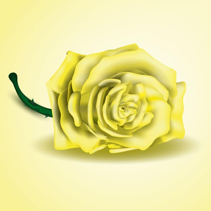 Flor da rosa do amarelo como perto acima ilustração royalty free