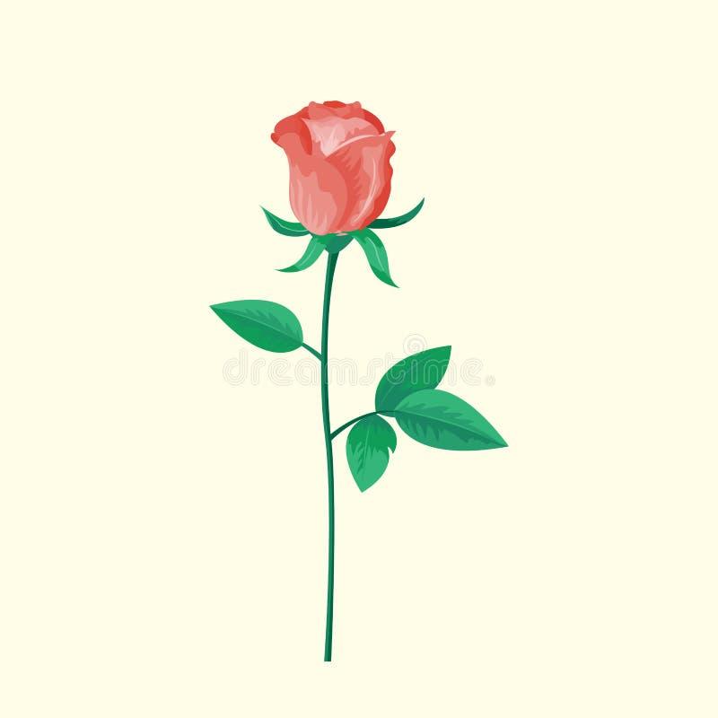 A flor da rosa do rosa do vintage pode ser usada como o cartão, o cartão do convite para o aniversário do casamento e o outro ver ilustração stock